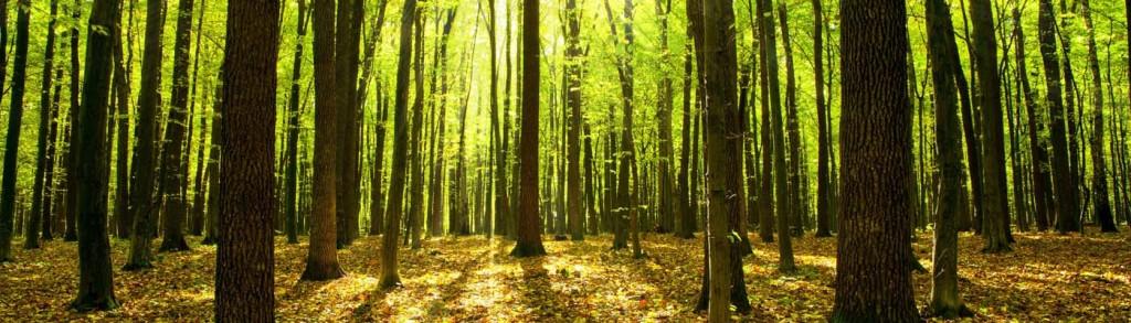 sun-through-green-forest_crop
